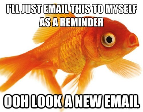 The Goldfish Attention Span