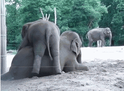 gmail sponsored promotions elephants