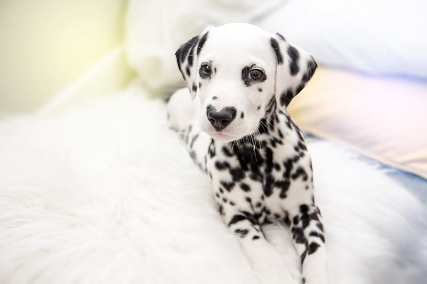 Search Versus Display image 8:Dog with heart mark on nose enchants the soul