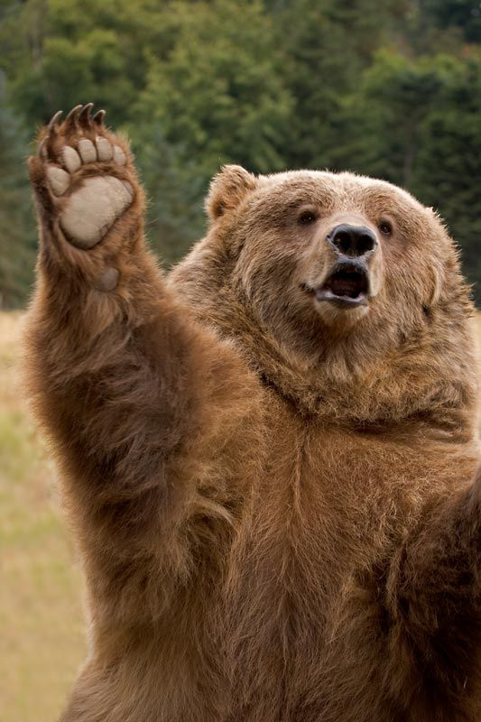 Grow with Digital Marketing bear